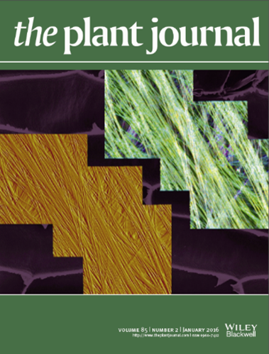 Plant Journal cover January 2016